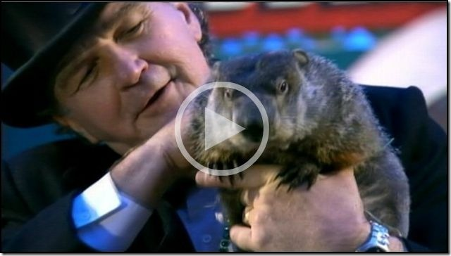 Groundhog Day 2013 'Punxsutawney Phil' Predicts Early Spring from ABC Video